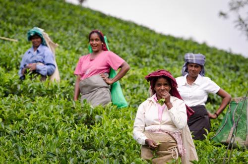 Šri Lanka – kolekcionuojantiems įspūdžius ir besirūpinantiems gyvenimo pilnatve