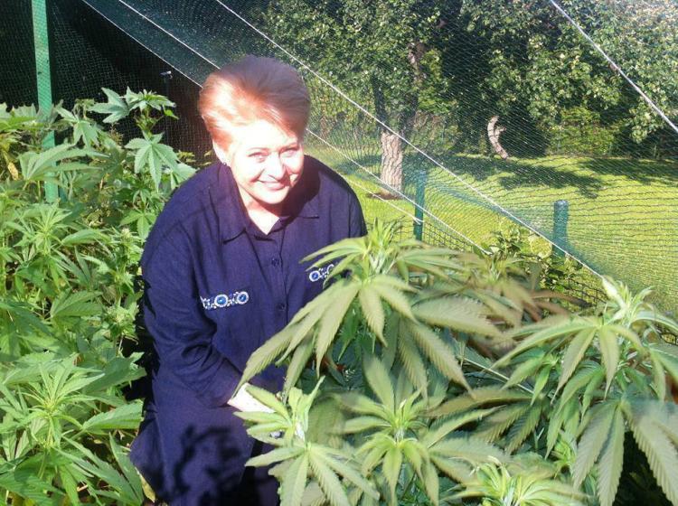 Atspėkite, kas fotografuojasi prie marihuanos krūmų?