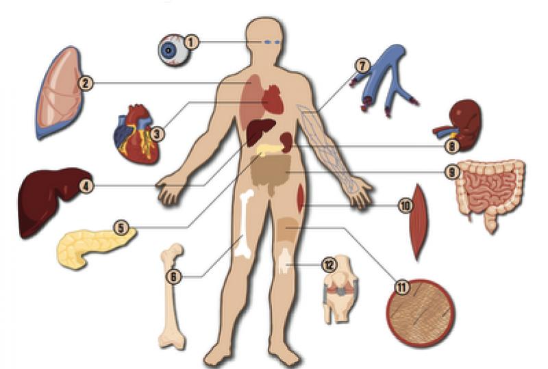 Organų donorai – žmonės, kurių dėka sukasi gyvybės ratas