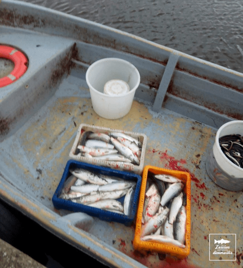 Pasidalinkite, kad visi pamatytų kur dingsta Lietuvos žuvys