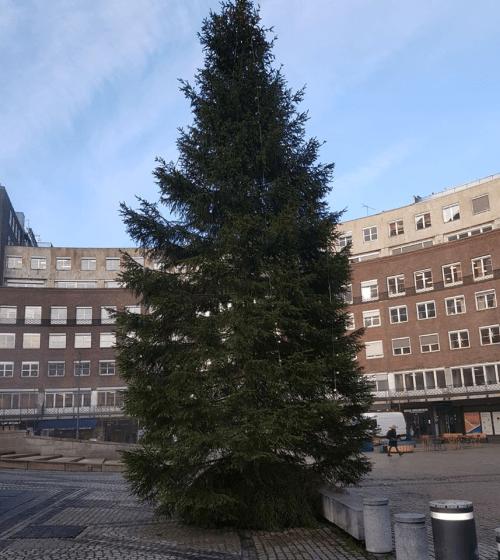 Vilniaus kalėdinė eglė – valstybės skurdo ir kvailumo simbolis